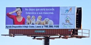 Perros y Gatos Felices y Seguros™ (Happy and Safe Dogs and Cats)