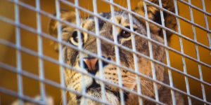 Please sign our Petition – Tell the Riverside, CA County Fair Board to stop the use of exotic animals at the Fair.